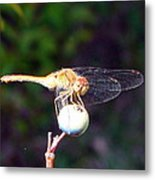 Dragonfly On Sphere Metal Print by Mark Haley