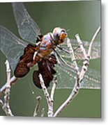 Dragonfly On The Tree Metal Print