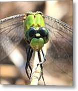 Dragonfly Perspective Metal Print by Carol Groenen