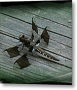 Common Whitetail Dragonfly Metal Print