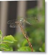 Dragonfly Smile Metal Print