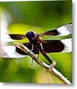 Dragonfly Stalking Metal Print