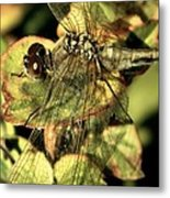 Dragonfly Wingspan Metal Print