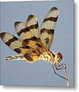 Dragonfly With A Little Girl's Face Metal Print