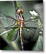 Drangonfly Metal Print