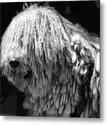 Dreadlock Dog Metal Print