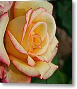 Dream Come True Grandiflora Metal Print