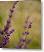 Dreamy Purple Metal Print