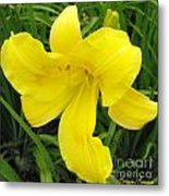 Dressed In Yellow Metal Print