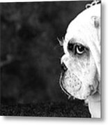 Dressed Up Dog Metal Print