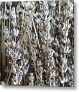 Dried Metal Print by Shannon Grissom