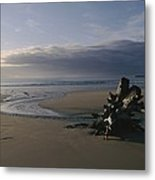 Driftwood And Tidal Pools, Victoria Metal Print