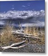 Driftwood By The Sea Metal Print
