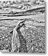 Driftwood Sketch Metal Print