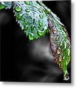 Dripping Wet Metal Print by Karen M Scovill