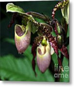 Drippy Lady Slipper Orchids Metal Print