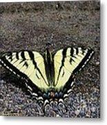 Driveway Butterfly Metal Print