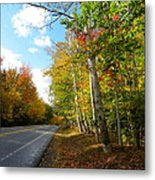 Driving Though The Birches Metal Print