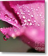 Droplet On Rose Petal Metal Print
