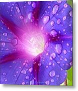 Droplets Glory Metal Print