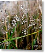 Droplets On Grass Metal Print