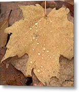 Drops On A Golden Leaf  Metal Print