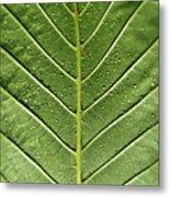 Drops On Poinsettia Leaf Metal Print