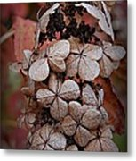 Dry Bloom Metal Print by Beverly Hammond