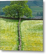 Dry Stone Wall And Lone Tree Metal Print