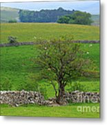 Dry Stone Wall And Twisted Tree Metal Print