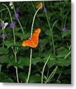 Dryas Iulia  Butterfly Metal Print