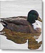 Duck 3 Metal Print