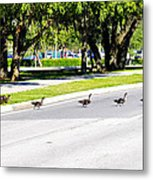 Duck Crossing Metal Print