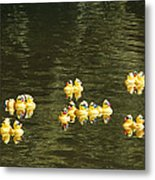Duck Derby Ducks Metal Print