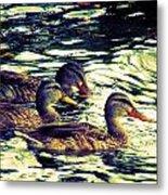 Duck Duck Duck  Metal Print