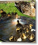 Duck Family Joy In Garden  Metal Print