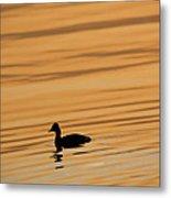 Duck On Golden Water Metal Print