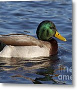 Duck On The Water Metal Print
