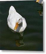 Duck Out - Stop Peking On Me Metal Print