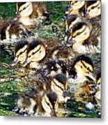 Duck-pile Metal Print
