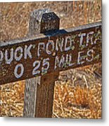 Duck Pond Trail Metal Print