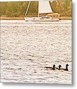 Duck Sailing Metal Print