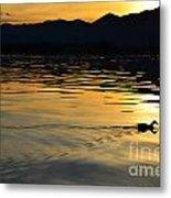 Duck Swimming Metal Print