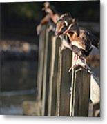 Ducks Ducks Ducks Metal Print