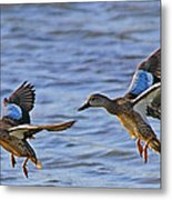 Ducks In Flight Metal Print