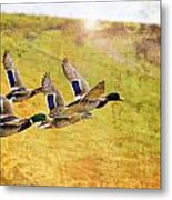 Ducks In Flight V4 Metal Print