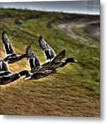Ducks In Flight V5  Metal Print