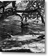 Ducks In The Shade In Black And White Metal Print