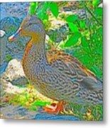 Duckside Metal Print