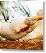 Ducky - Say It Again Please Metal Print